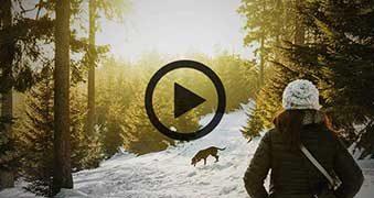 Einfache Hundeerziehung für zu Hause - Unser *Video-Tipp*
