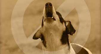Hund bellen abgewöhnen ohne Hundetrainer *Tipps & Tricks*