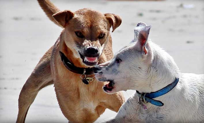 Hundeerziehung Fehler