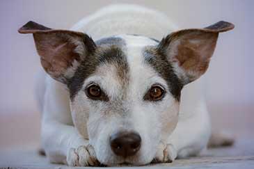 Hundeerziehung Gewalt