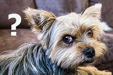Hundeerziehung Kommunikation