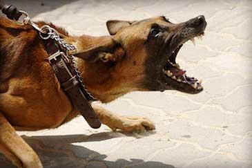 Hundetraining Fehlverhalten