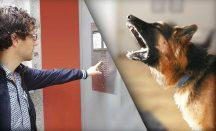 Hund bellt wenn es klingelt