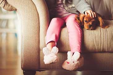 Hund bewahrt ruhe wenn es klingelt