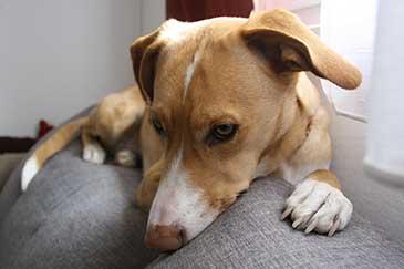 Hundebellen abgewöhnen