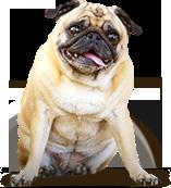 fern erziehungshalsband hund