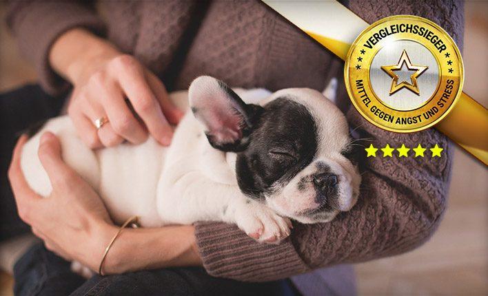 Mittel gegen Angst und Stress für Hunde