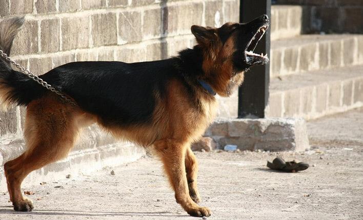 Hunde bellt andere Hunde an