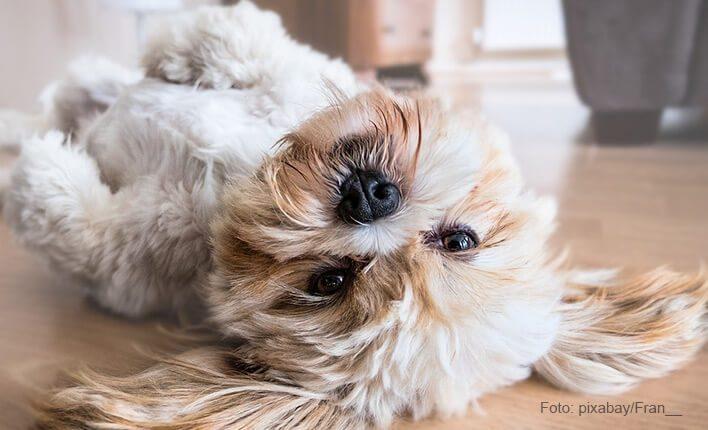 Hund bellt wenn er alleine ist