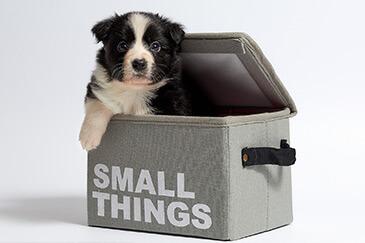 Hilfe bei Hund Bellen abgewöhnen