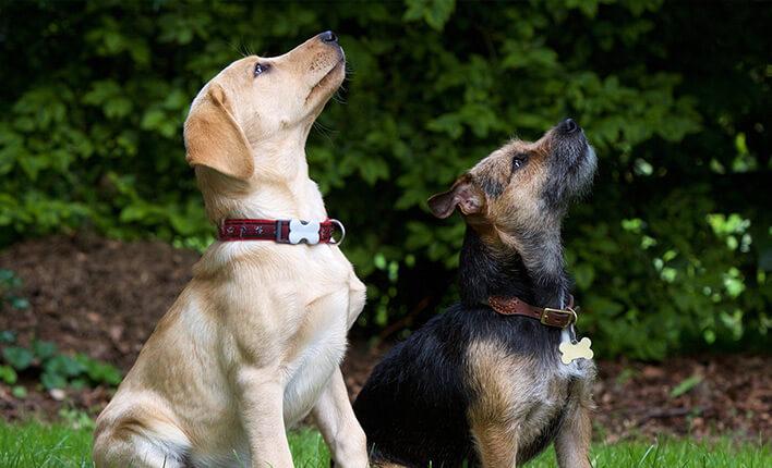 Ultraschall gegen Bellen für Hunde
