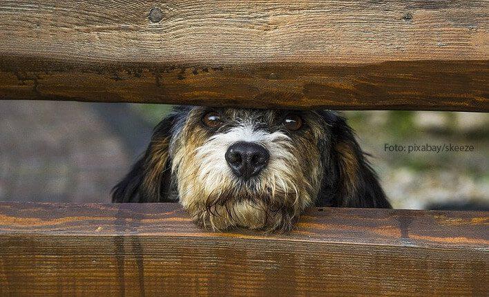 Hund hört nicht