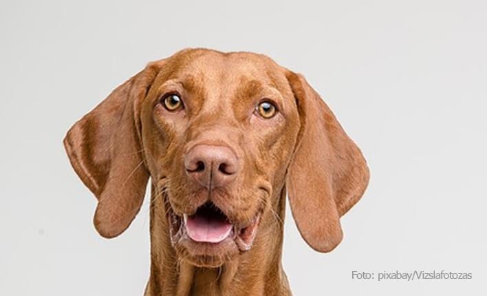 Unser Fazit zu Hundeschermaschine