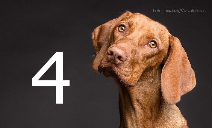 Qualitätsfaktoren für Hundeschermaschine