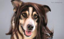 Die Wahl der richtige Hundeschermaschine