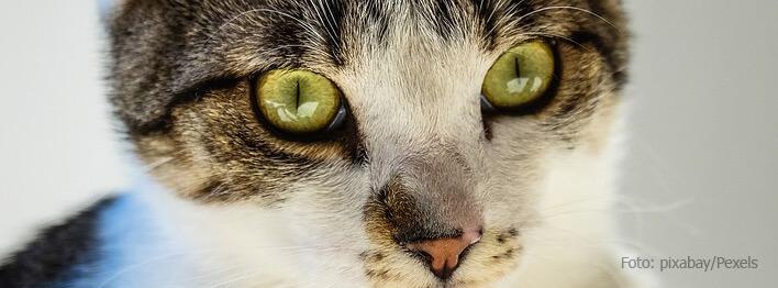 Erfolgreiche Katzenabwehr